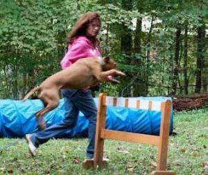 Christie dog training Raja