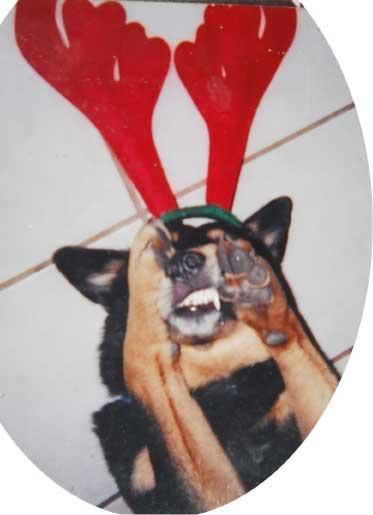 Tampa The Reindeer Dog